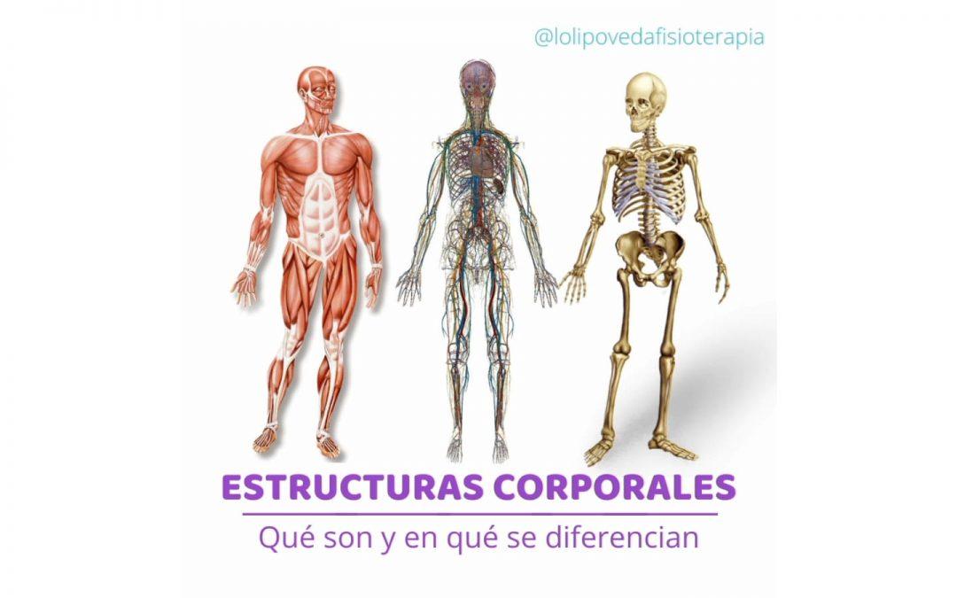 Estructuras Corporales, ¿Qué son y en que se diferencian?