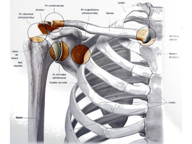 Ejercicios para la estabilidad de hombro
